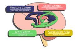 Brain.02.color