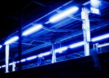 Blue Platform