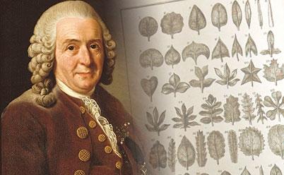 Linnaeus.cropped