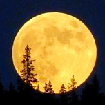 Full Moon Above Pines