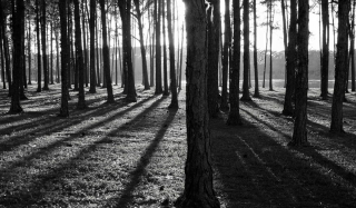 Shadows and Trees