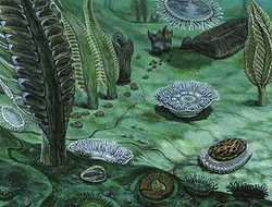 Mbdprecambrian