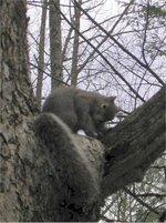 Squirrel1_small_1