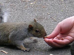 Squirrelclose_up