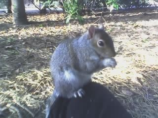 Squirrel_on_knee
